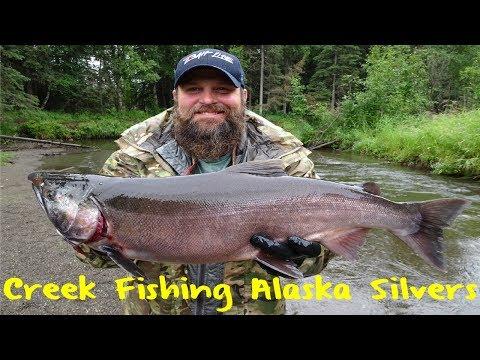 Creek Fishing For Alaska Silvers