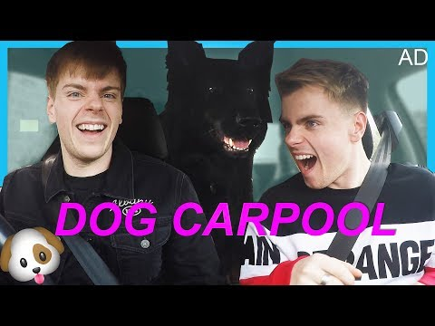 Christmas Carpool Karaoke with our Dogs | AD
