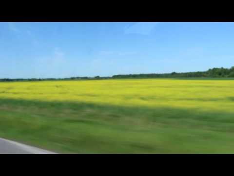 カウナス~シャウレイ(十字架の丘)の道風景
