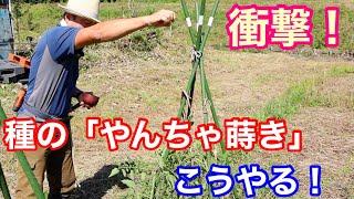 【自然農法】目からウロコの種まき方法「やんちゃ蒔き」のやりかた!