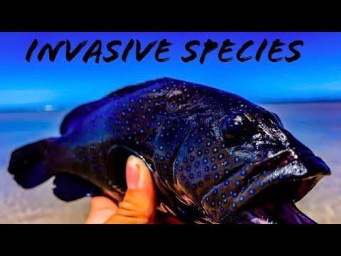 Invasive Species Day!