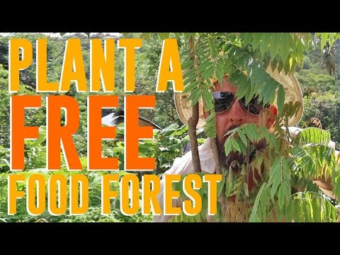 We Planted A FREE Food Forest... In One Day!