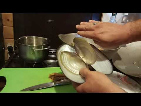 Как приготовить речные мидии. Наловил крупных двустворчатых моллюсков