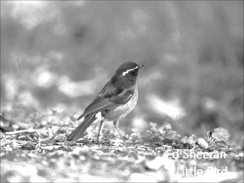 Ed Sheeran - Little Bird Karaoke/Instrumental