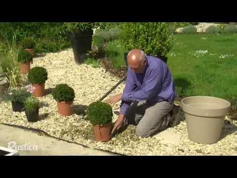 Habiller un gravier avec des plantes - YouTube