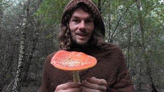 Pilze Sammeln: Der Fliegenpilz