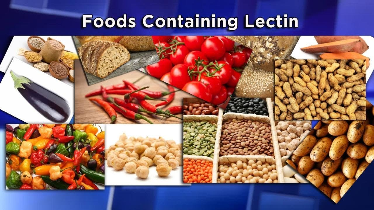 Image result for lectins pictures