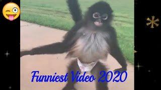 Funniest Animal Behaviour 2020 || Funny animal Compilation 2020