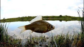 Рыбалка на карася в августе.