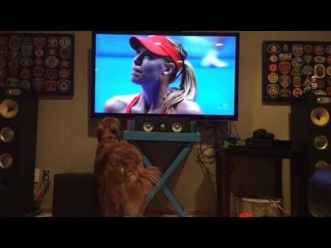 George Loves Tennis, Annie Does Not