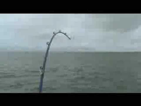 Pancing Ikan Besar Youtube