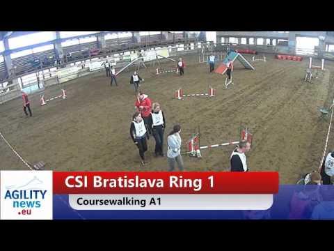Petr Pupik Judging CSI in Slovakia: A1 I Agility