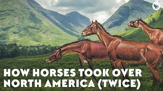 How Horses Took Over North America (Twice) TWICE 検索動画 21