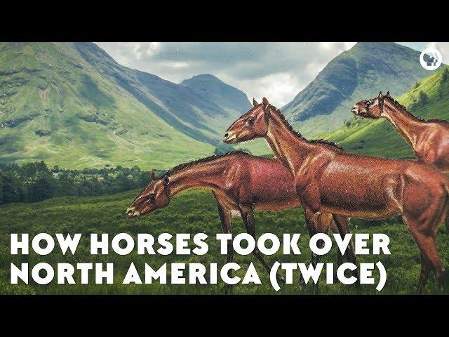 How Horses Took Over North America (Twice)