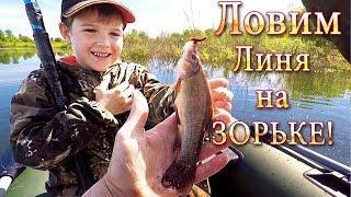 Ловим ЛИНЯ! Рыбалка с Сыном на Зорьке! Не Плохо...!