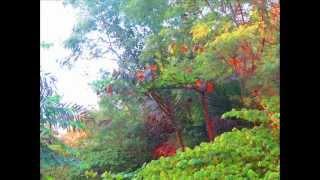 ASSES Natureza Exuberante