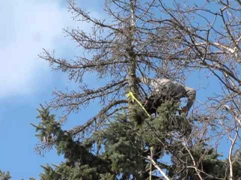 how to bring back a dying tree