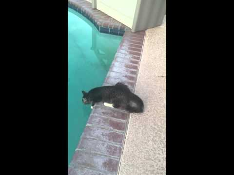 Cats can't swim