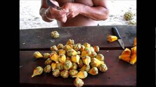 Making Wreath For The Head From Pandanus Seeds