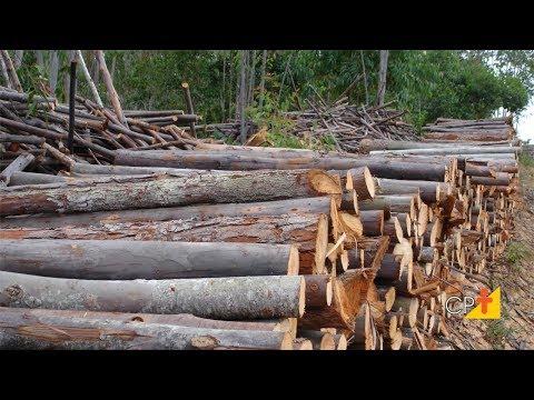 Curso Uso de Madeira de Eucalipto na Fazenda
