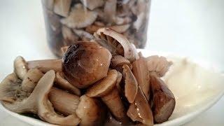 Солим грибы горькушки, грузди и волнушки//Хрустящие соленые грибы!!!