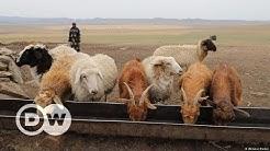 Weidemanagement in der mongolischen Steppe | DW Deutsch