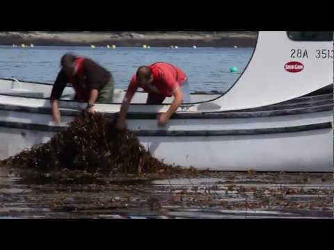 Seaweeds - A part of everyday life