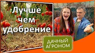 7 бесплатных уроков про мульчу Как мульчировать почву