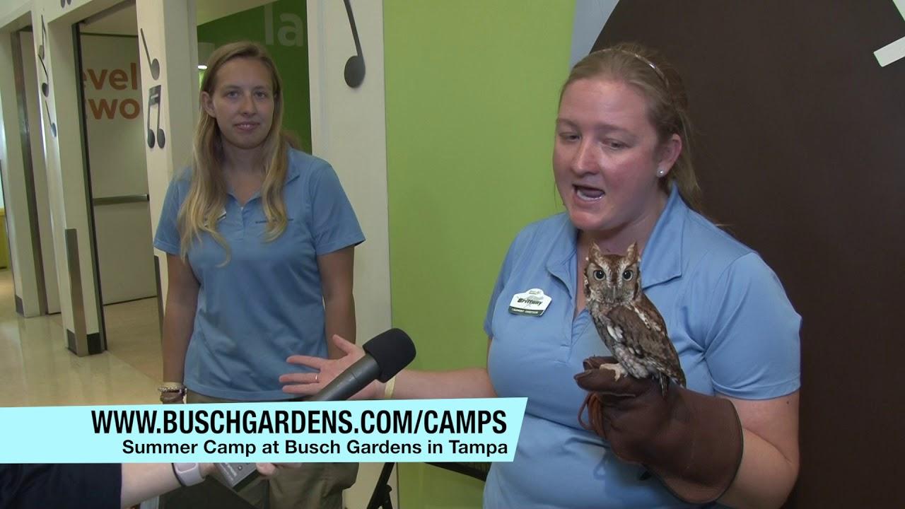 Summer Camp At Busch Gardens In Tampa Youtube