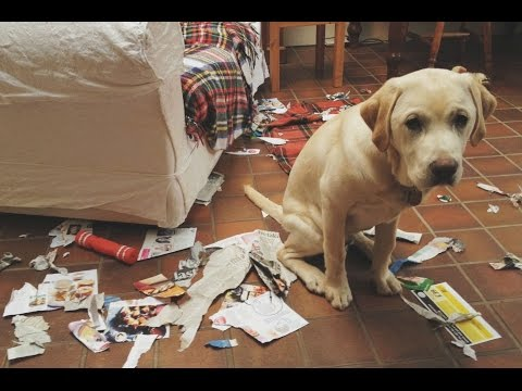 Funny Guilty Dogs Compilation Part 3