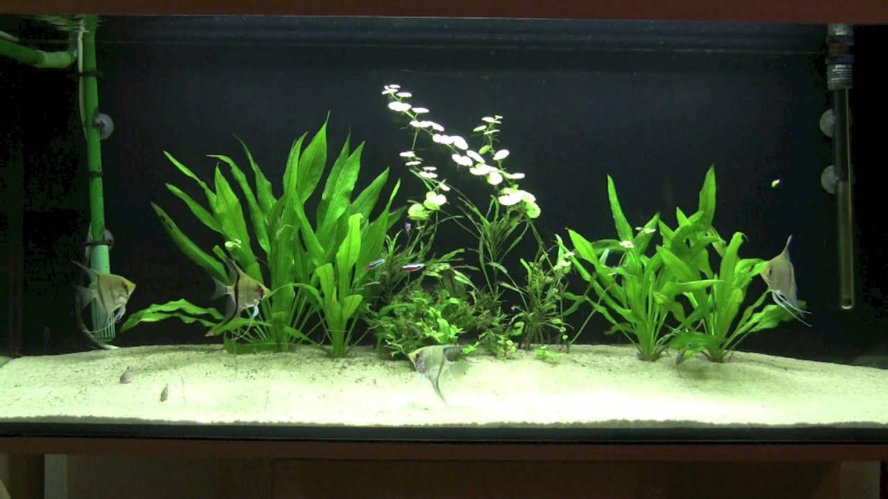 Aquarium skalare 240l youtube for Skalar aquarium