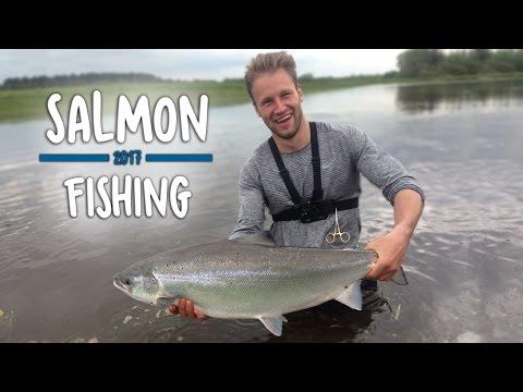 KÆMPE FED LAKS - Skjern Å | Salmon Fishing