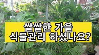 쌀쌀한 계절 식물들 가을준비 5가지