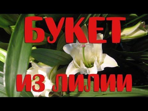 Лилии каталог лучших сортов Продажа лилии почтой, по