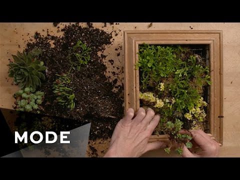 Diy Succulent Wall Frame Glam It Yourself ★ Glam Com