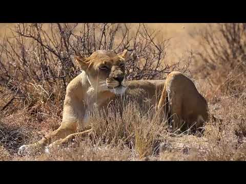 Bush Ways Safaris - Kalahari