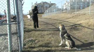 Mission Impawsible - Dog Training Calgary.mpg