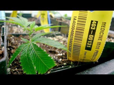 Drogen Eine Aufklärung Doku Originaldrogen Kann Man Nicht