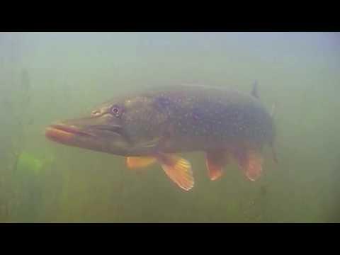 О чем молчат рыбы. Выпуск 16