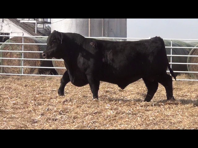 Express Ranches Lot 324