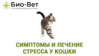 Стресс У Кошки & Симптомы И Лечение Стресса У Кошки. Ветклиника Био-Вет