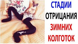 Мемы и Приколы с Котами 2021 года  Подборка смешные мемчики про котов за 13 Октября #shorts