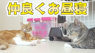 cute cats relaxing together on the floor