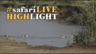 Lucky zebra fights and escapes the jaws of a Mara River crocodile!