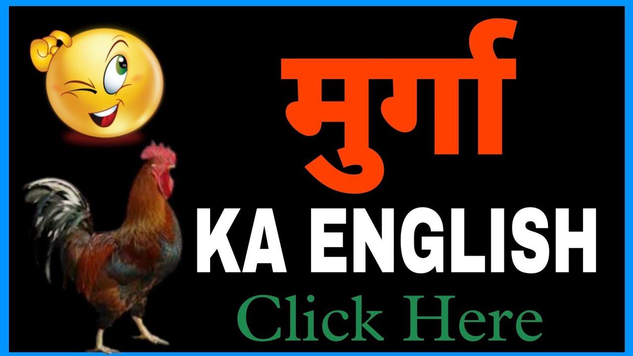 Murga Murga Ko English Mein Kya Kahate Hein Murga Ka English Kya Hota Hai Youtube टिंडे को इंग्लिश में क्या कहते है 🤔🤔 tinda ko english me kya kahate hain, tinda vegetable in english our other. murga ko english mein kya kahate hein