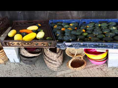 Total Health Food Program