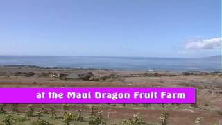 Zipline Adventure at Maui Dragon Fruit Farm