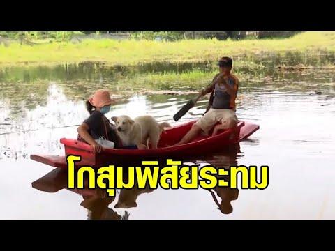 ชาวโกสุมพิสัย ติดเกาะ น้ำท่วมถนนถูกตัดขาด โอดน้ำขึ้นไวลดช้า จะเข้าห้องน้ำทีก็ลำบาก