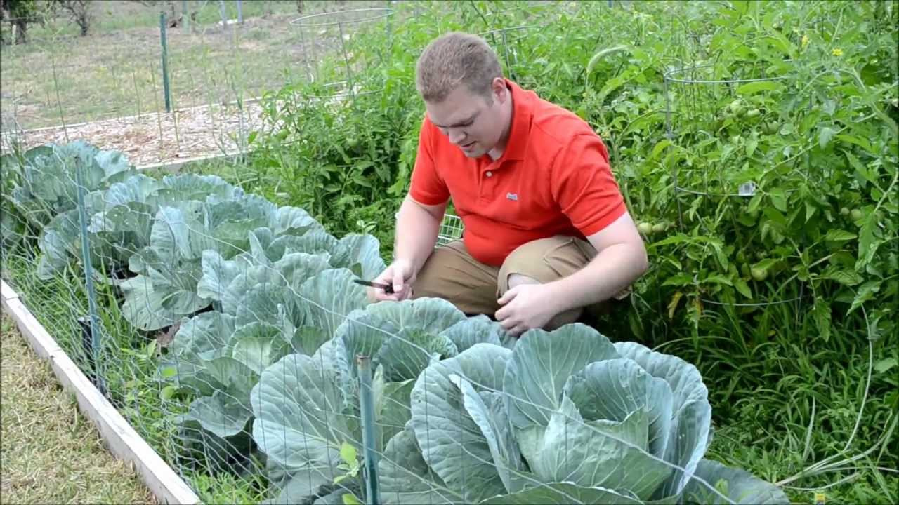texas organic spring vegetable garden 2012 update 4 of 8 youtube
