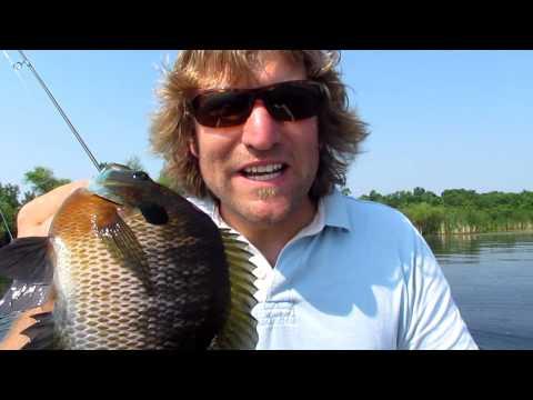 Video Catfish tail